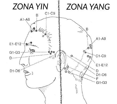 yamamoto acupuntura ZONAS